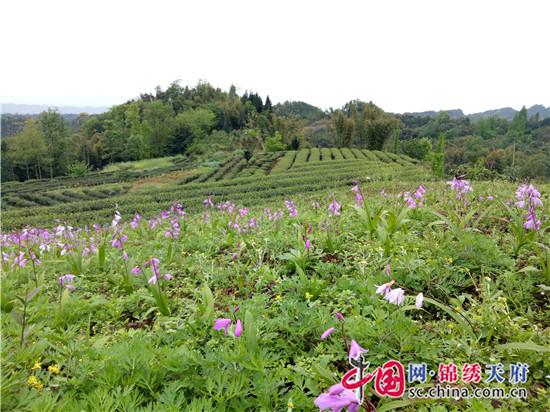 洪雅县汉王乡:党建引领促发展 产业撑起富民路