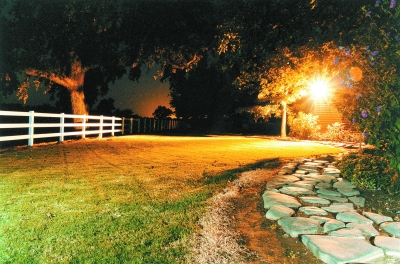 """夜间""""光污染""""可能导致植物减产"""