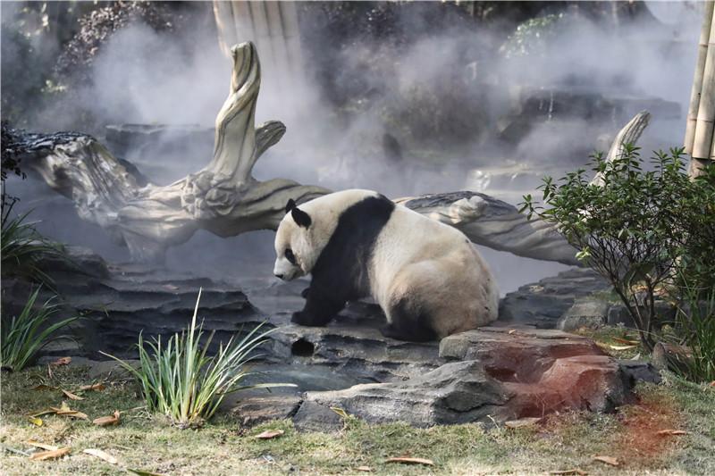 """""""滚滚撒欢住新家熊猫基地太阳产房全新升级""""!"""