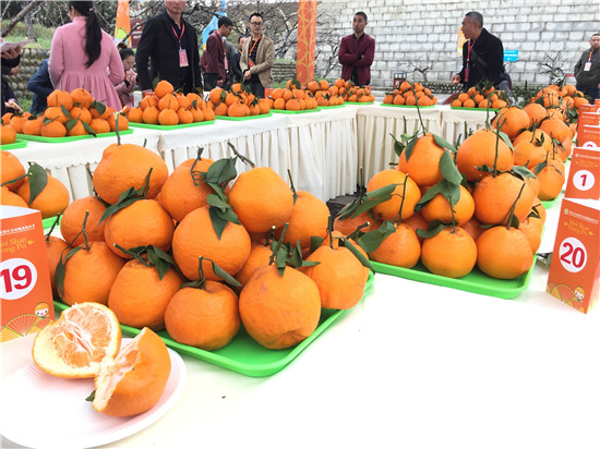 眉山市东坡区2018年首届晚熟柑橘节隆重开幕