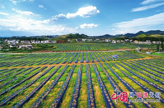 http://www.ncchanghong.com/nanchongjingji/10206.html