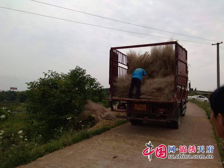 """船山区龙凤镇""""三举措""""做好秸秆禁烧工作"""