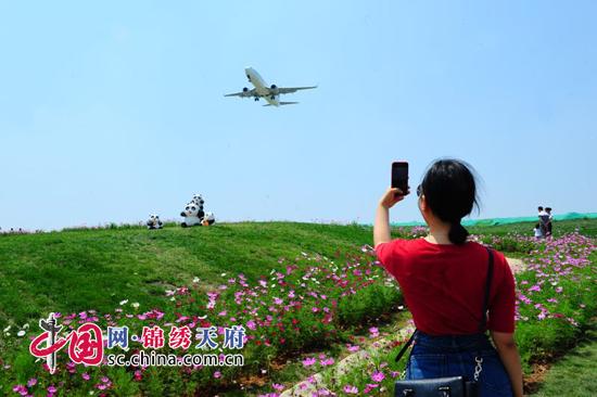 """双流区航域景观""""空港花田""""成为成都新地标"""