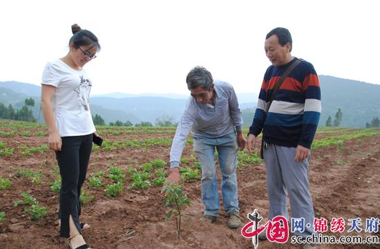 射洪双溪乡:80后返乡创业种藤椒  带乡亲在荒地播种致富希望