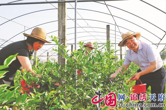 农商文旅融合  走乡村振兴特色路