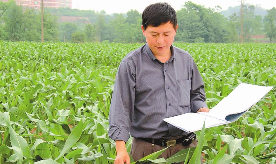 南充玉米专家郑祖平 科研成果增收44亿元