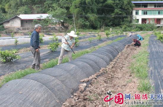 射洪县瞿河乡: 产业兴在家门口 村民增收不用愁