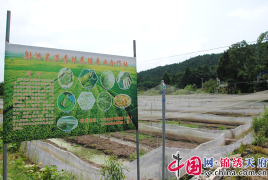射洪县太乙镇:聚焦产业发展,增强致富后劲