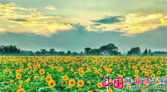 成都:新津网红社区 田园变公园