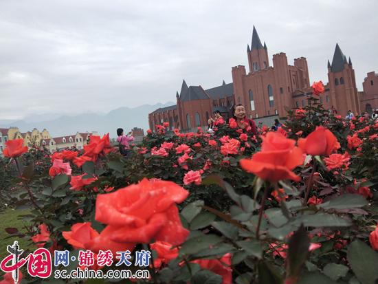 浪漫玫瑰·香约德阳 第八届中国月季展将持续至10月28日