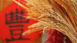 农民丰收节:重拾农耕记忆 助力乡村振兴