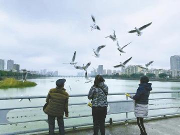 德阳已成为国内重要的观鸟城市