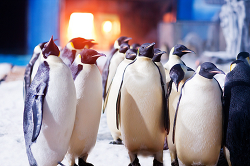 真冰真雪真极地 花16元去成都海昌海洋公园玩转整个冬天