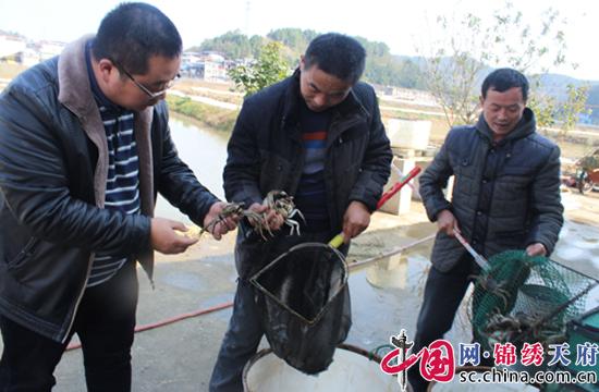 射洪天仙镇窑坝村大户带动产业兴村,呈现新气象