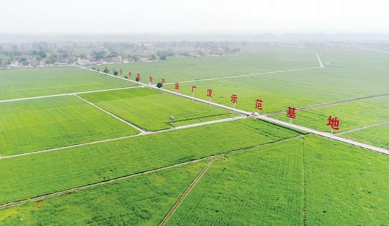 四川现代粮食产业(广汉)示范基地