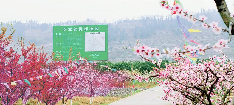 """广汉松林镇做好产业融合发展文章——乡村振兴开""""花""""结""""果"""""""