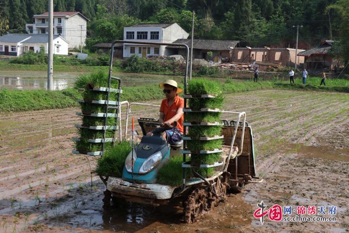 遂宁农业农村局召开会议分析当前粮油生产形势