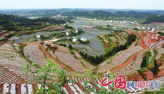 嘉陵区大力推动现代农业快速发展 产业成景观 园区变公园