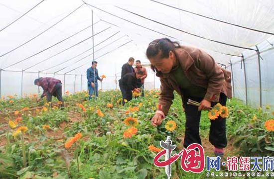 射洪金鹤乡:花卉种植走出乡村振兴路