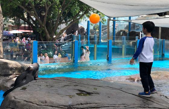 南美小海狮首次欢度儿童节,开启2019小小旅行家活动征程
