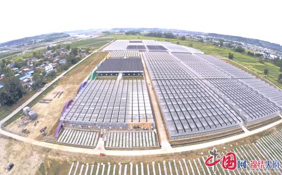 蓬溪县天福镇(产业报道篇):小小杏鲍菇托起一个特色名镇