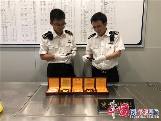 一旅客携带小叶紫檀和砗磲制品入境被成都双流海关截获
