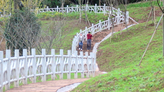 金凤山公园二期项目全线主路已完工